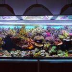 Por qué debería usar agua de ósmosis inversa para su acuario: sistemas de agua dulce
