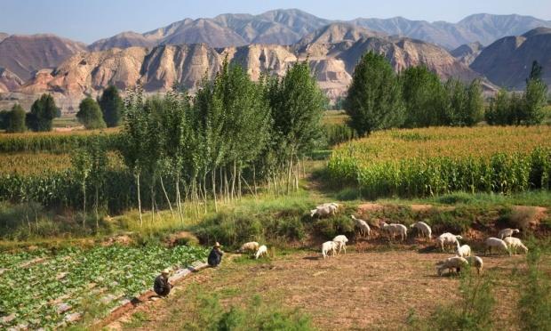 cultivos en China