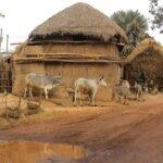 Filtración y almacenamiento de agua de lago en un pueblo de Bengala - FILTROS DE AGUA