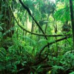 Filtros de agua en el Amazonas para agua de lluvia