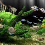 Filtro de agua para acuarios - Ósmosis inversa para acuarios