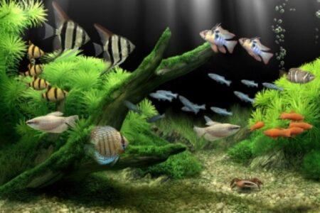 Filtro de agua para acuarios – Ósmosis inversa para acuarios